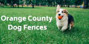 Orange County Dog Fences